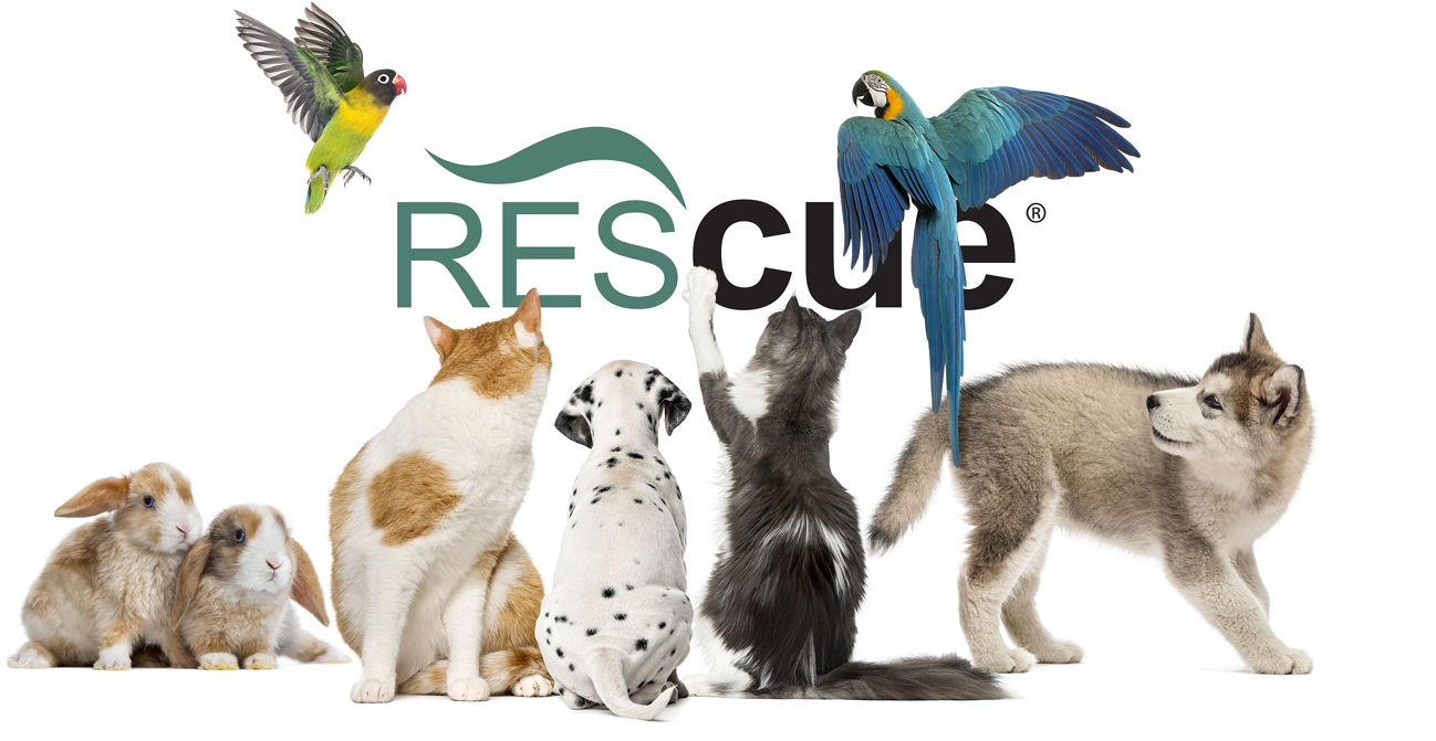 Header-RescueFamily