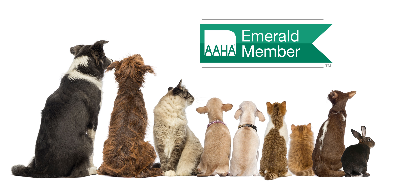 Header-Alliance-AAHA