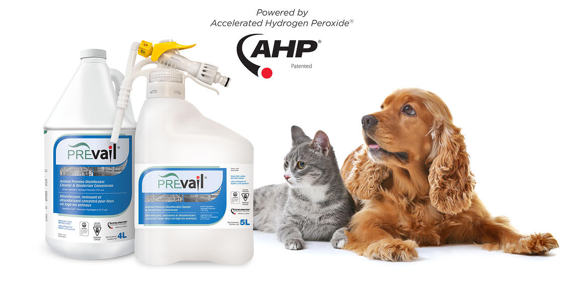 Header-Comp-PrevailConcentrate