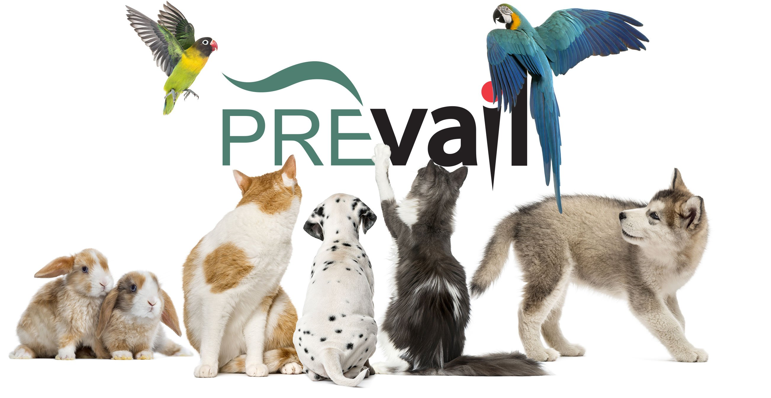Header-Comp-PrevailFamily.jpg