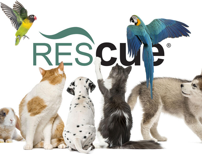 Mobile-Header-RescueFamily.jpg