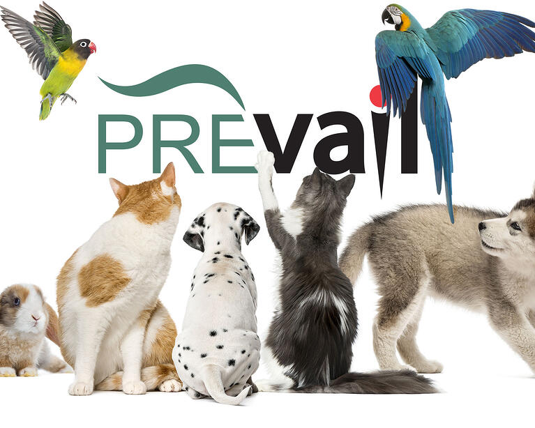 Mobile-header-PrevailFamily