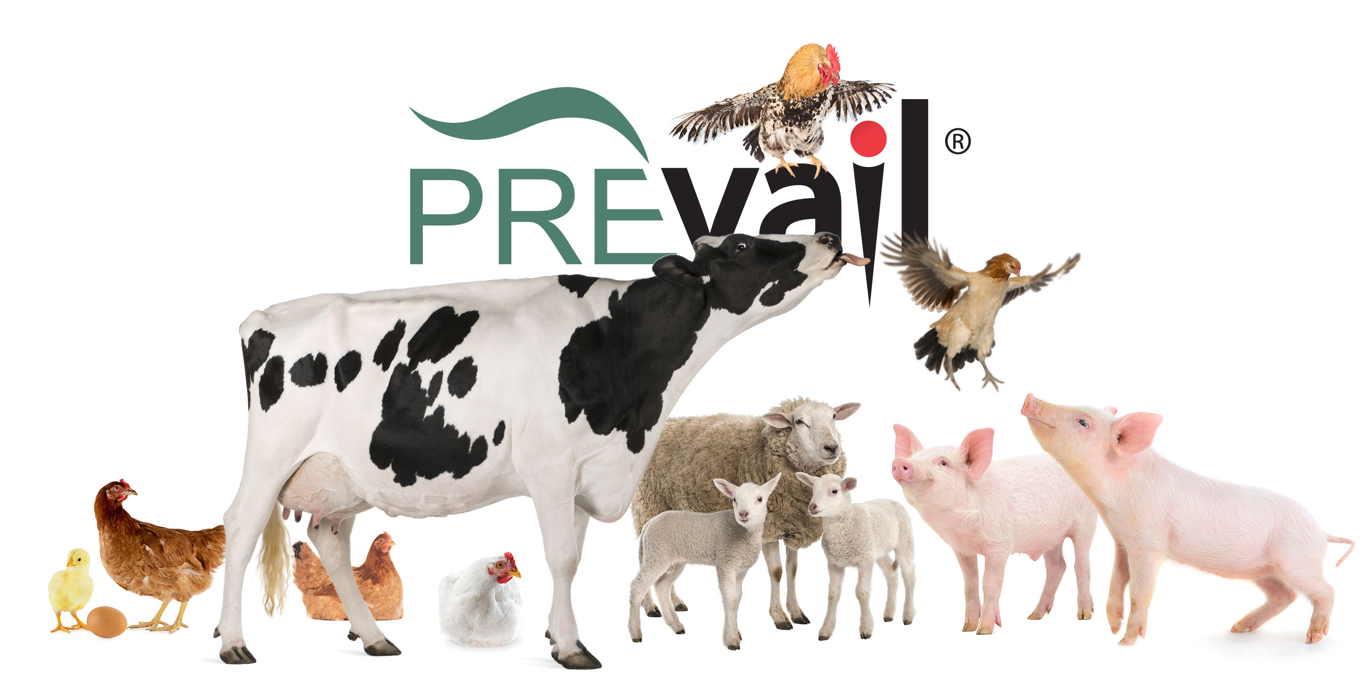 Header-Farm-Prevail-Family.jpg